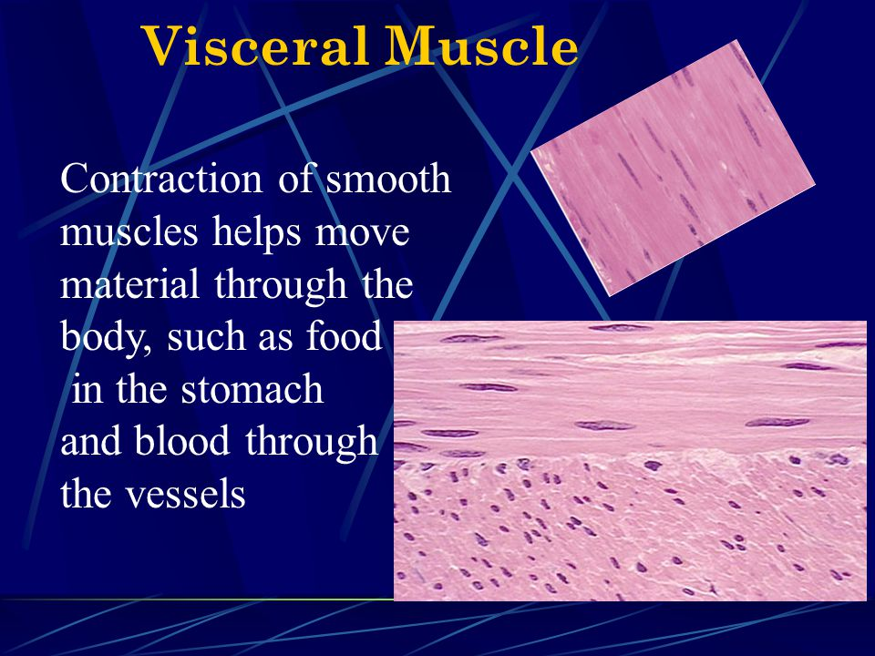 Visceral Muscle Contraction of smooth muscles helps move material through the body, such as food in the stomach and blood through the vessels.
