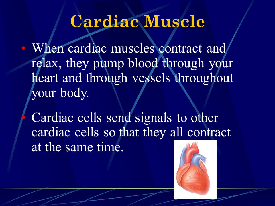 Cardiac Muscle When cardiac muscles contract and relax, they pump blood through your heart and through vessels throughout your body.
