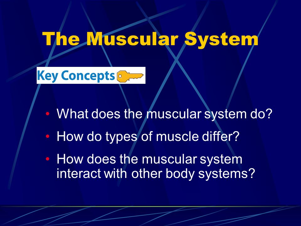 The Muscular System What does the muscular system do