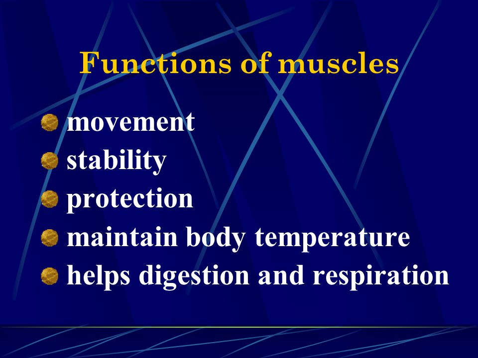 Functions of muscles movement. stability. protection.
