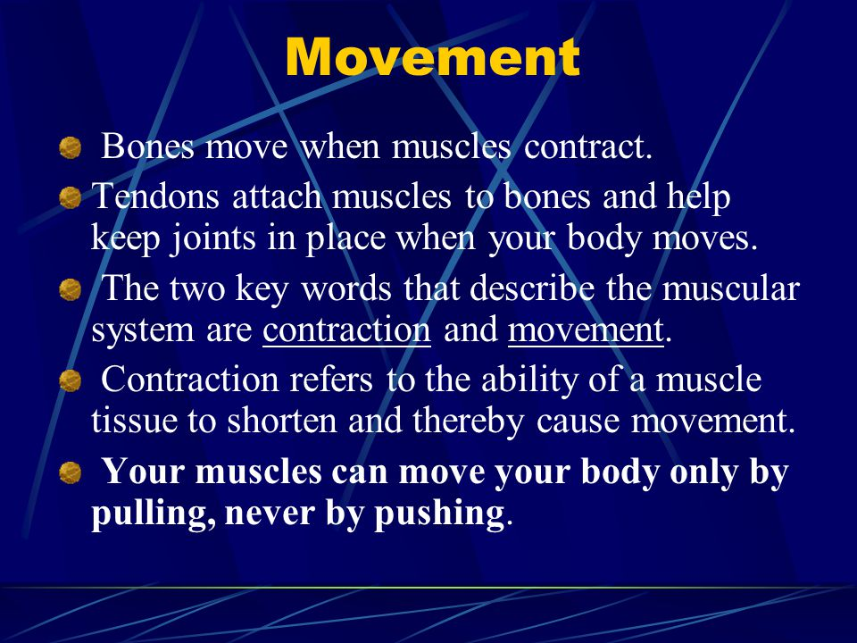 Movement Bones move when muscles contract.