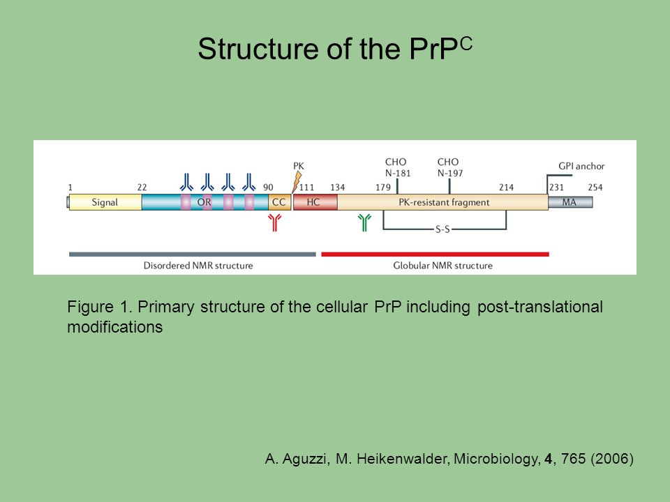 Structure of the PrPC Figure 1. Primary structure of the cellular PrP including post-translational modifications.