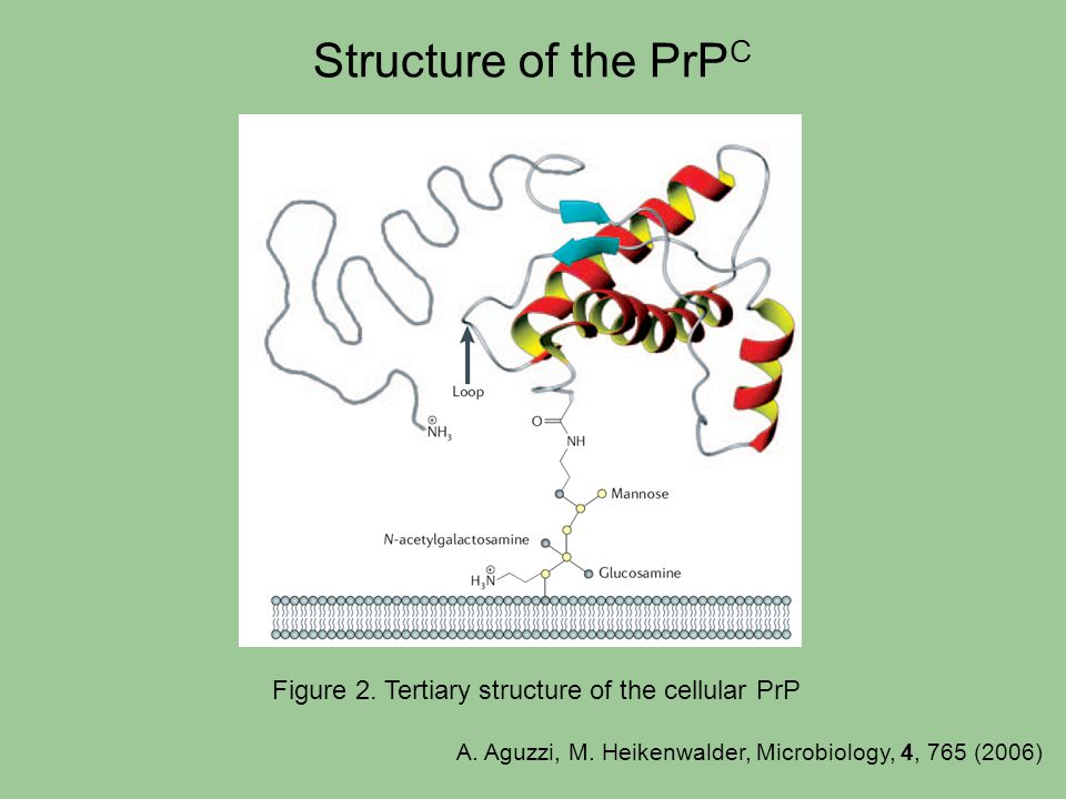 Figure 2. Tertiary structure of the cellular PrP