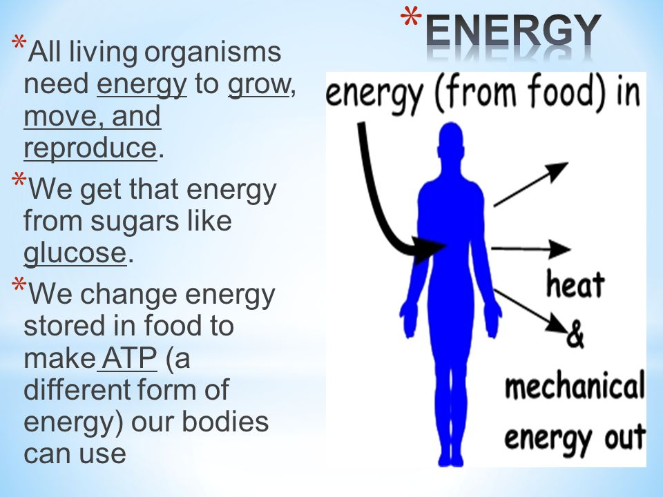 ENERGY All living organisms need energy to grow, move, and reproduce.