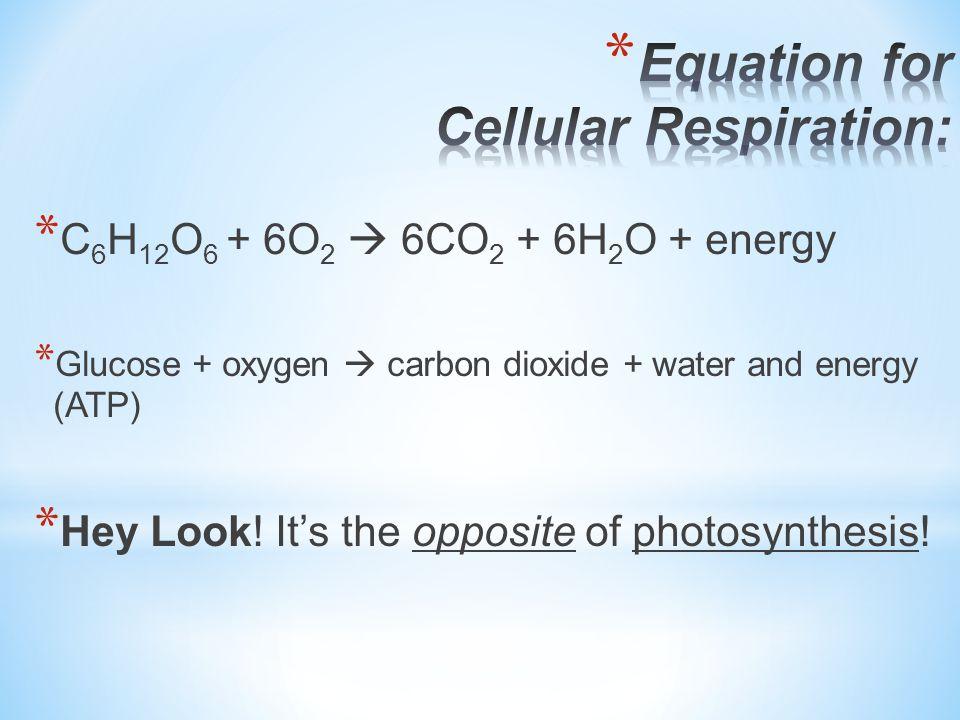 Equation for Cellular Respiration: