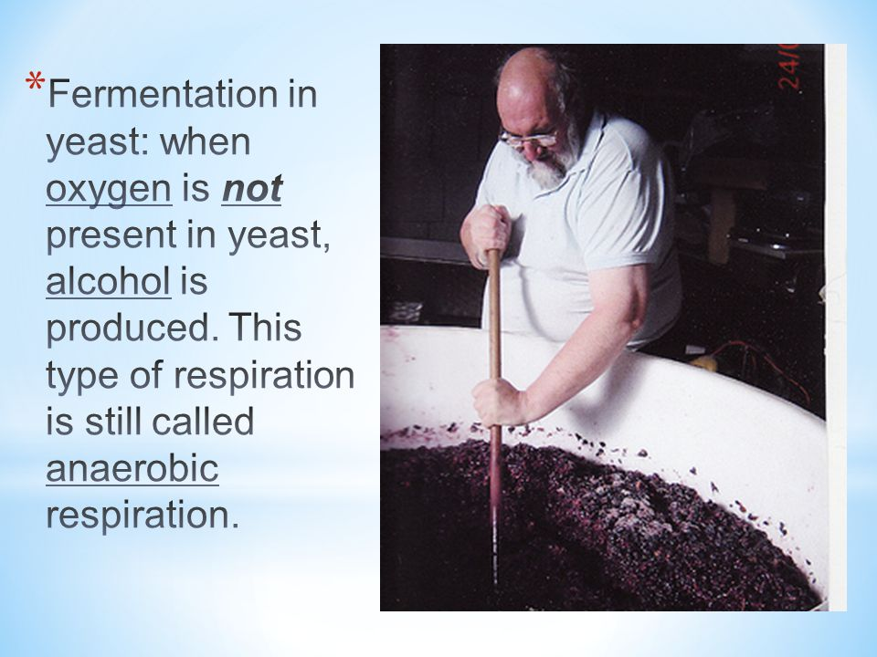 Fermentation in yeast: when oxygen is not present in yeast, alcohol is produced.