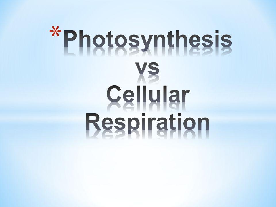 Photosynthesis vs Cellular Respiration