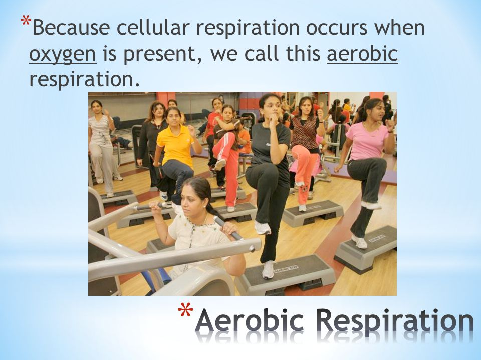 Because cellular respiration occurs when oxygen is present, we call this aerobic respiration.