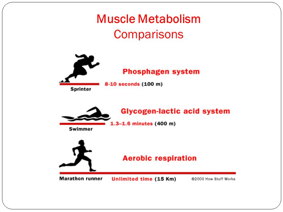 Muscle Metabolism Comparisons
