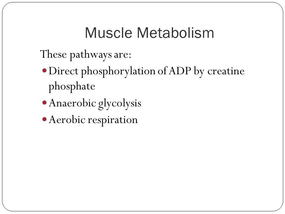 Muscle Metabolism Direct phosphorylation of ADP by creatine phosphate