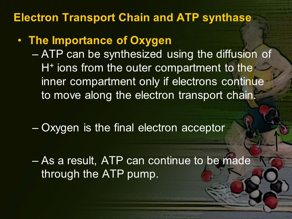 Electron Transport Chain and ATP synthase