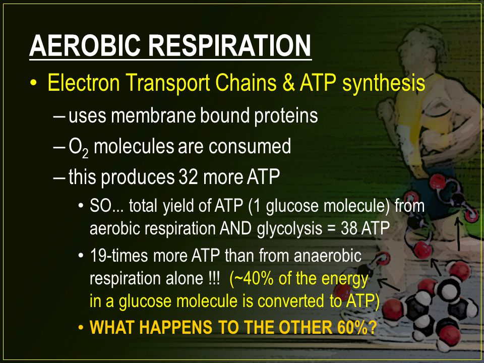 AEROBIC RESPIRATION Electron Transport Chains & ATP synthesis