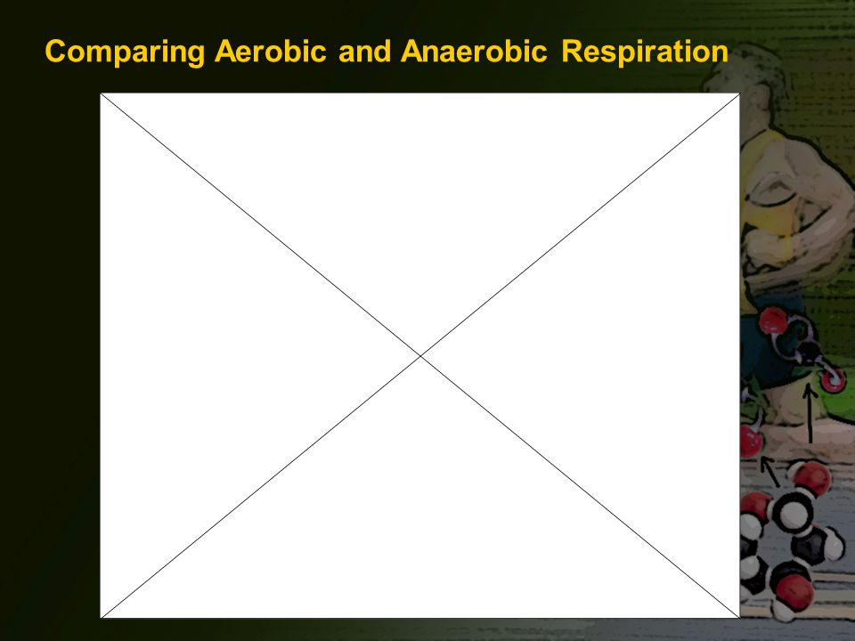 Comparing Aerobic and Anaerobic Respiration