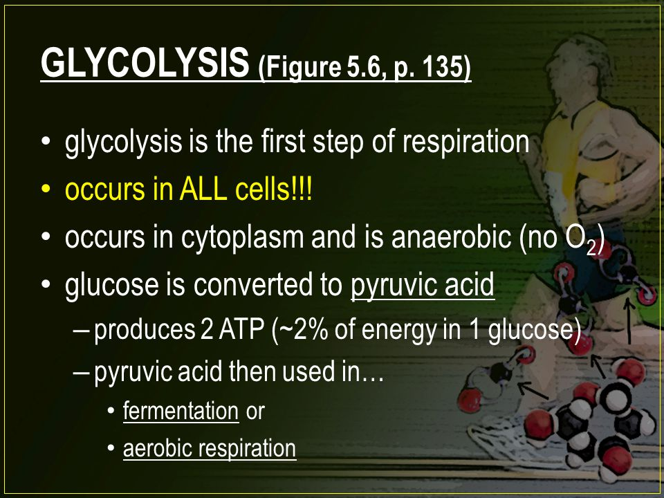 GLYCOLYSIS (Figure 5.6, p. 135) glycolysis is the first step of respiration. occurs in ALL cells!!!