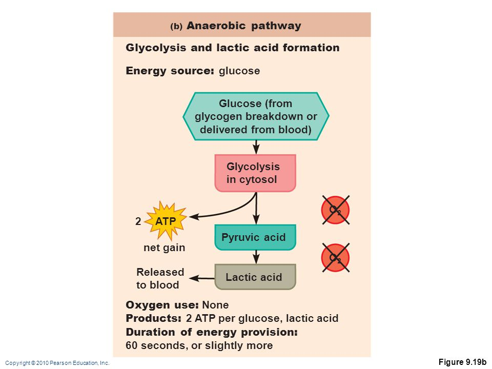 Glucose (from glycogen breakdown or delivered from blood)