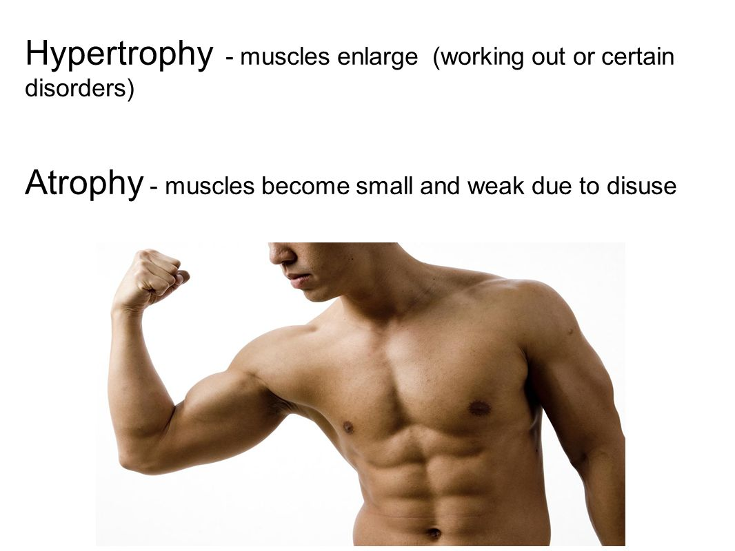 Hypertrophy - muscles enlarge (working out or certain disorders)