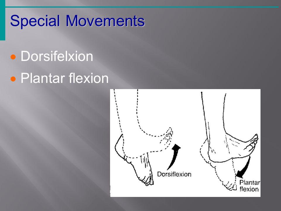 Special Movements Dorsifelxion Plantar flexion