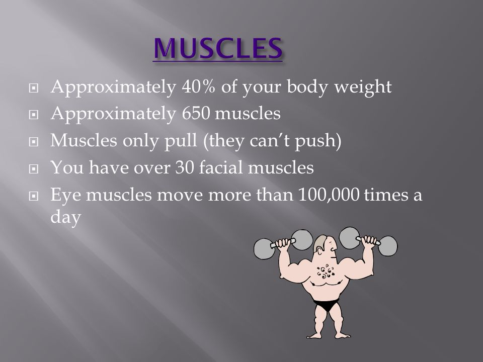 MUSCLES Approximately 40% of your body weight