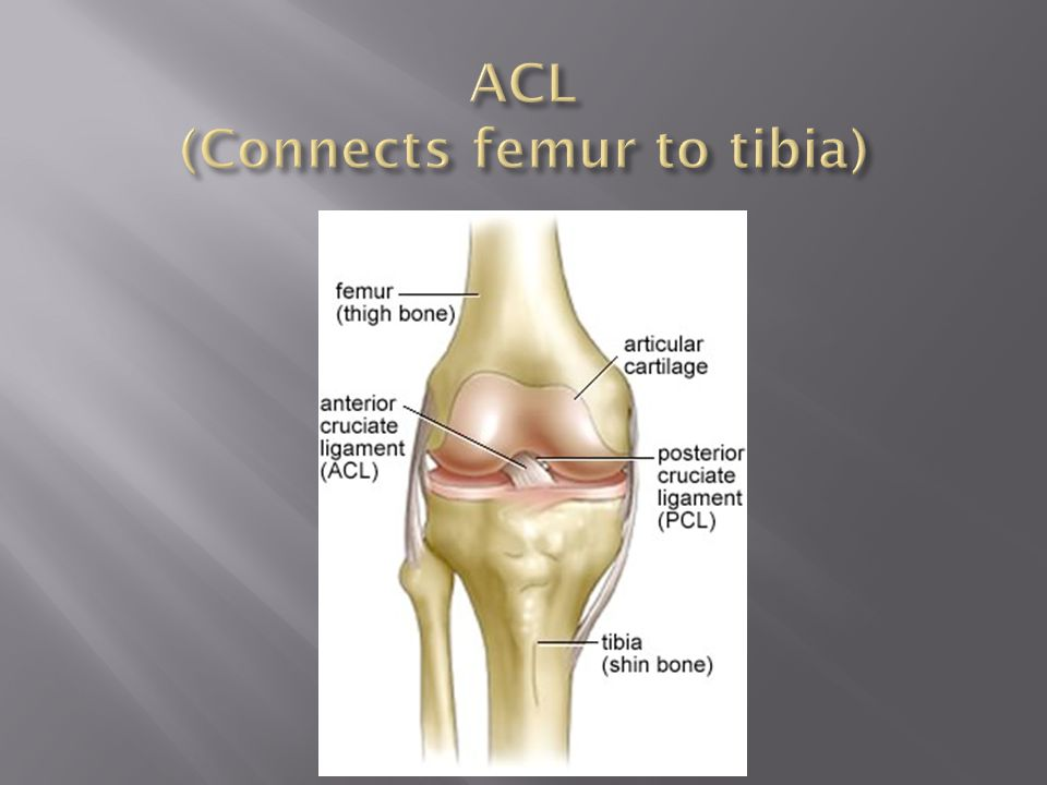 ACL (Connects femur to tibia)