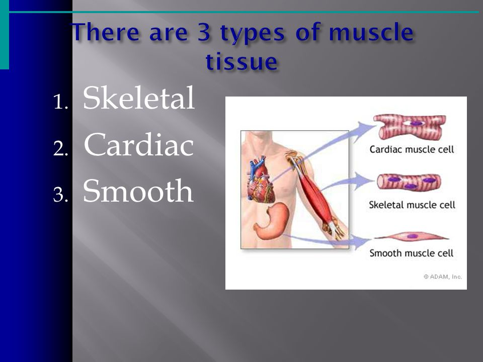 There are 3 types of muscle tissue