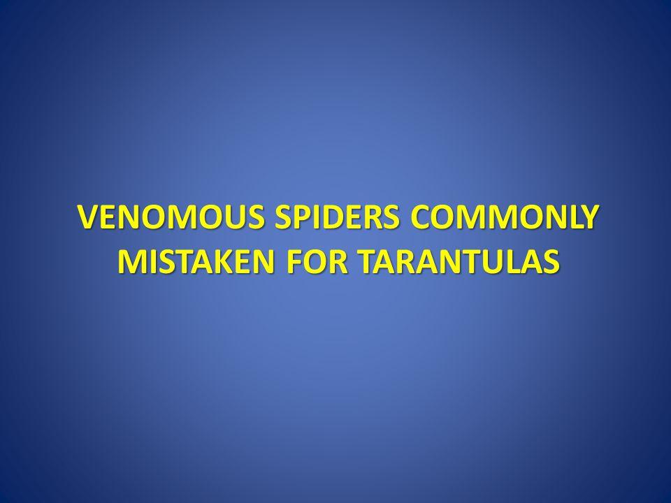 Venomous Spiders Commonly mistaken for Tarantulas
