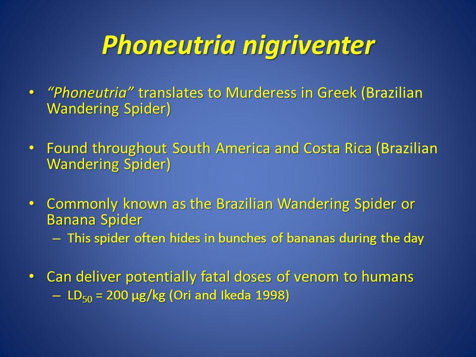 Phoneutria nigriventer