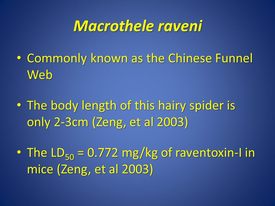 Macrothele raveni Commonly known as the Chinese Funnel Web
