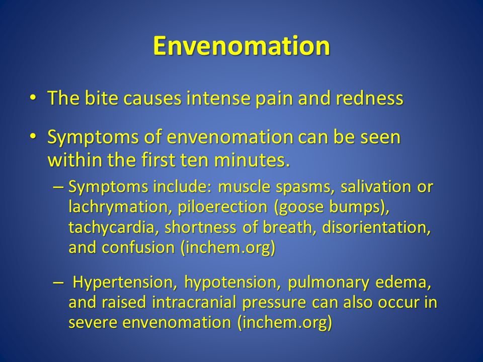 Envenomation The bite causes intense pain and redness