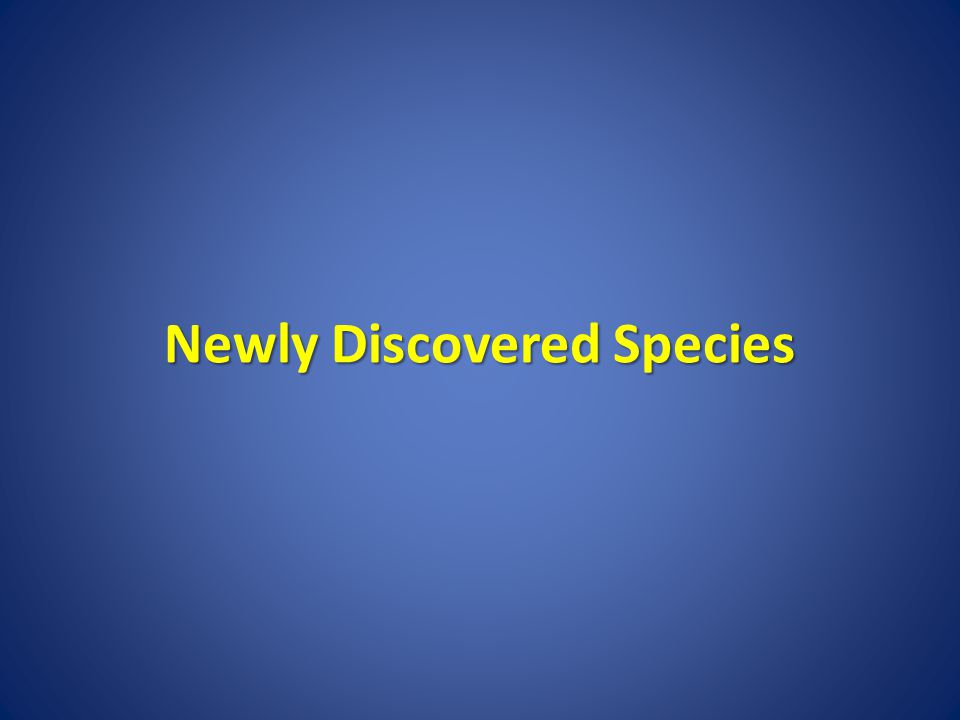 Newly Discovered Species