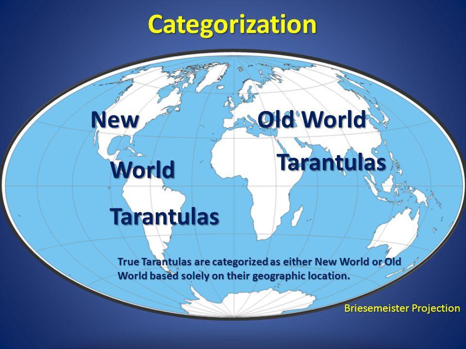 Categorization New Old World Tarantulas World Tarantulas
