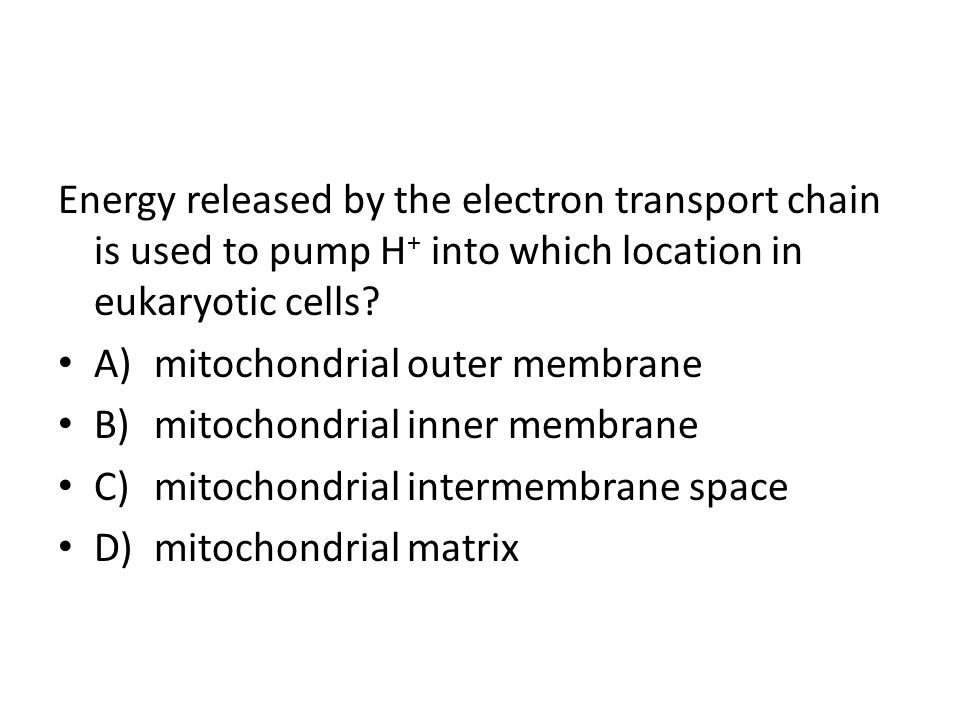 Energy released by the electron transport chain is used to pump H+ into which location in eukaryotic cells