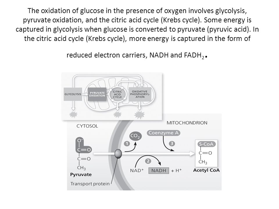 The oxidation of glucose in the presence of oxygen involves glycolysis, pyruvate oxidation, and the citric acid cycle (Krebs cycle).