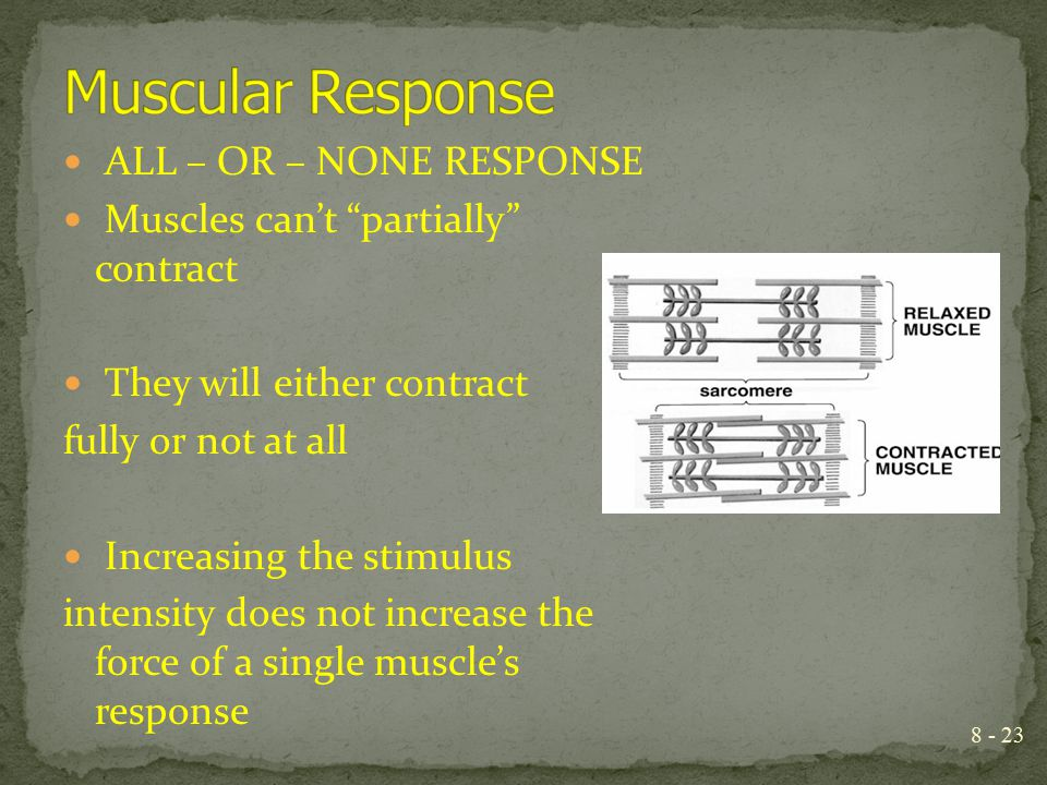 Muscular Response ALL – OR – NONE RESPONSE