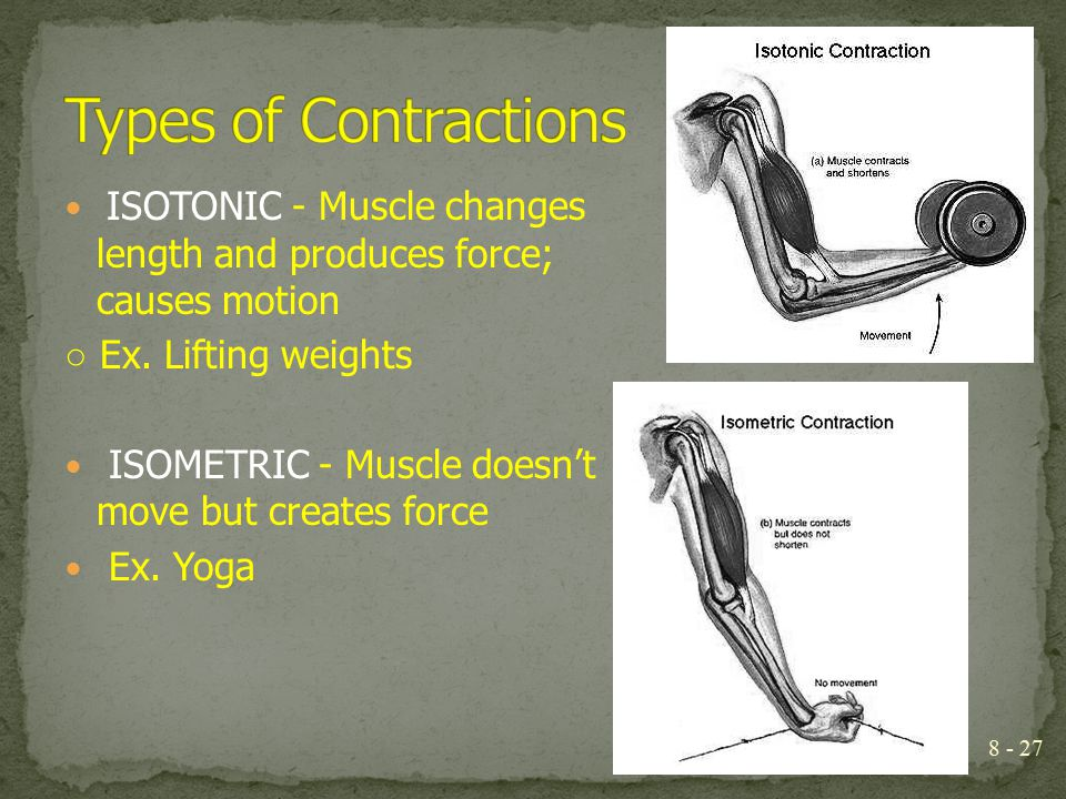 Types of Contractions ISOTONIC - Muscle changes length and produces force; causes motion. ○ Ex. Lifting weights.