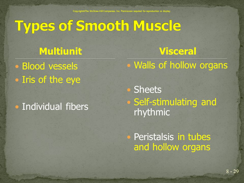 Types of Smooth Muscle Multiunit Visceral Blood vessels