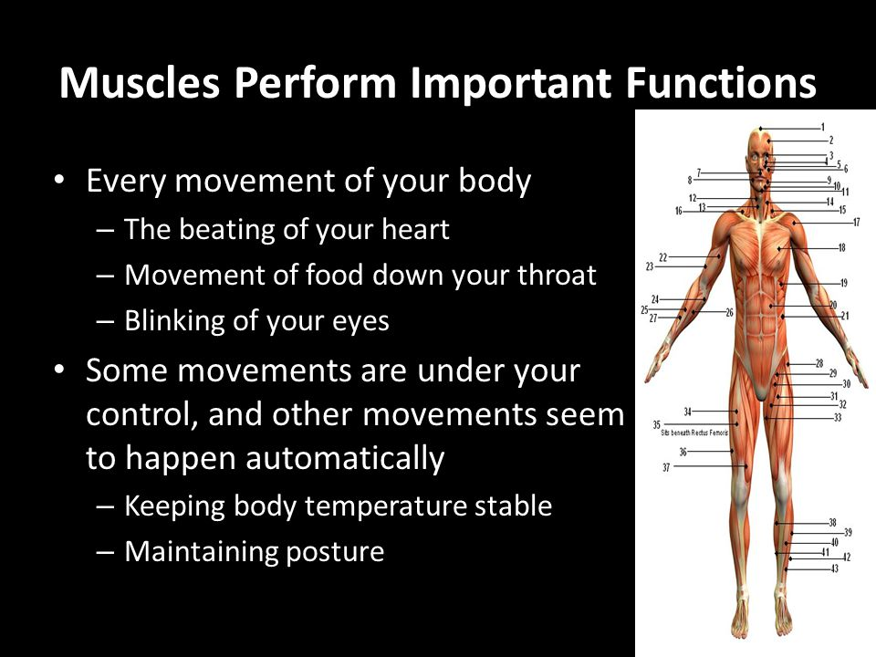 Muscles Perform Important Functions