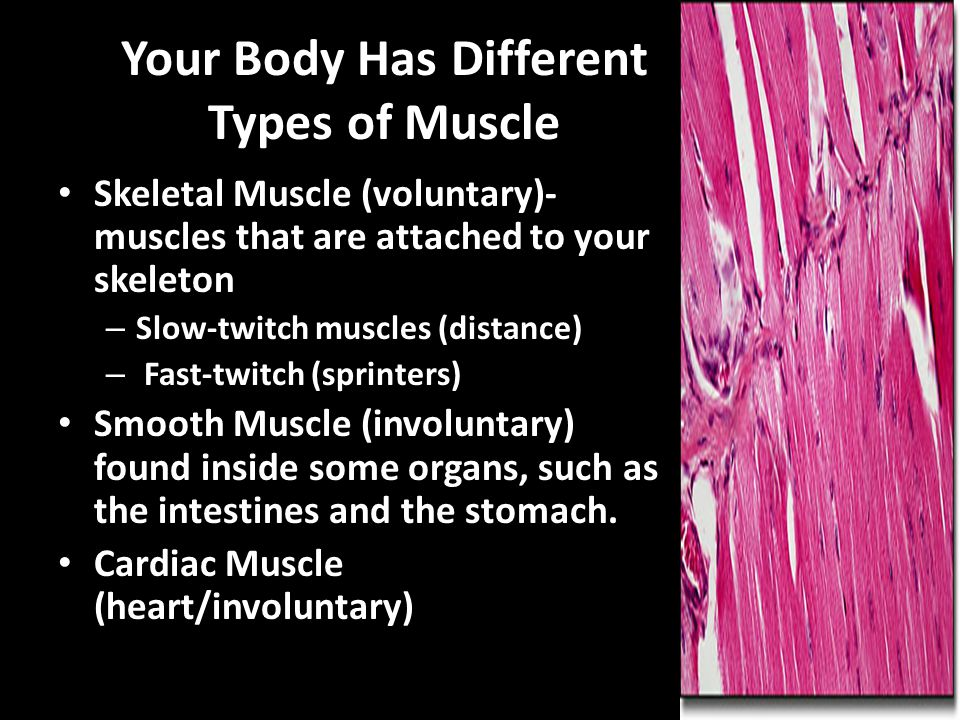 Your Body Has Different Types of Muscle