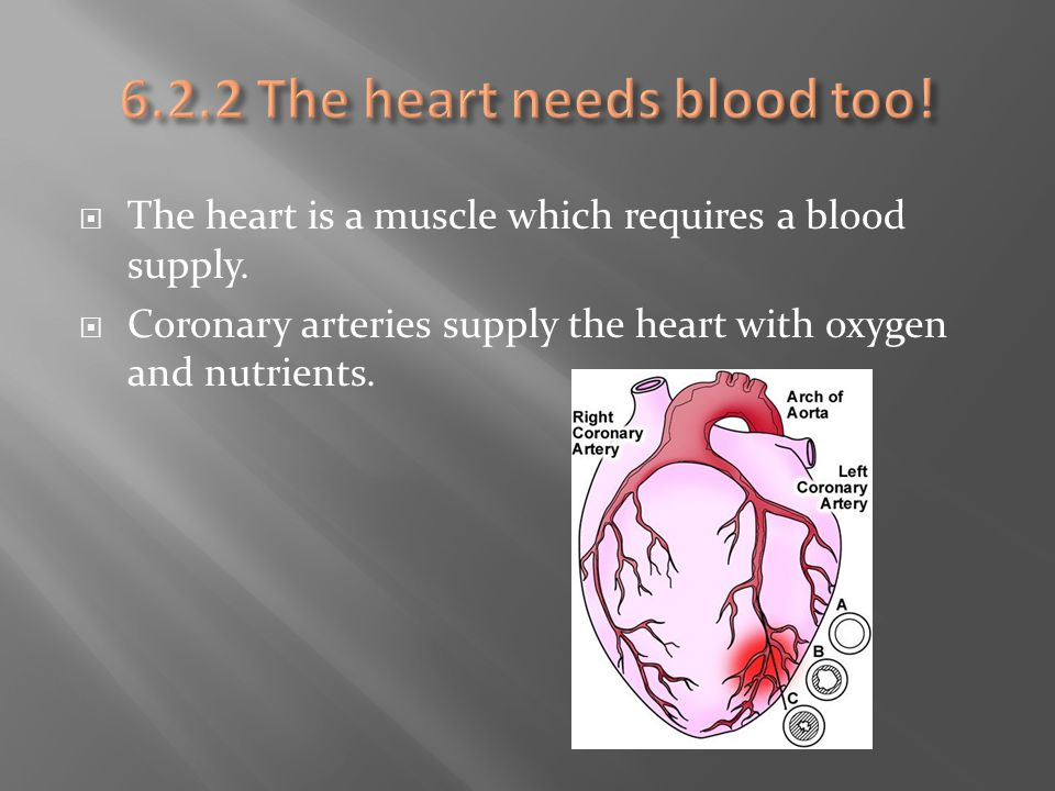 6.2.2 The heart needs blood too!