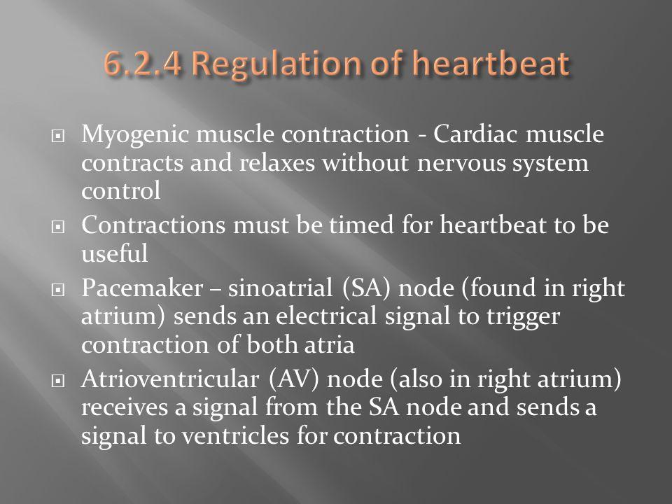 6.2.4 Regulation of heartbeat