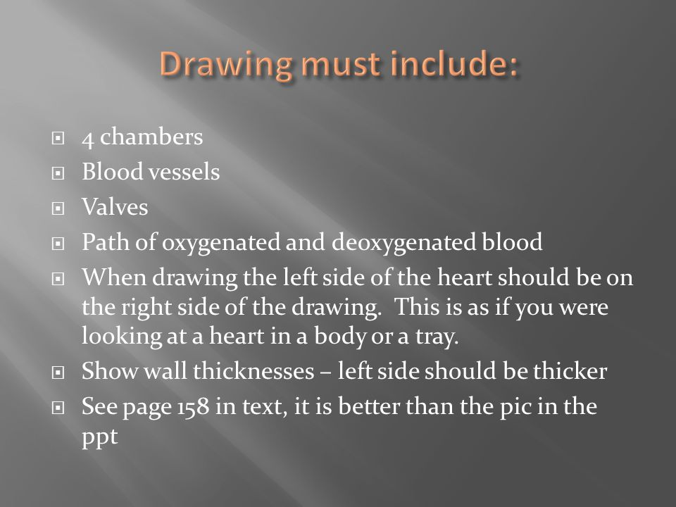 Drawing must include: 4 chambers Blood vessels Valves