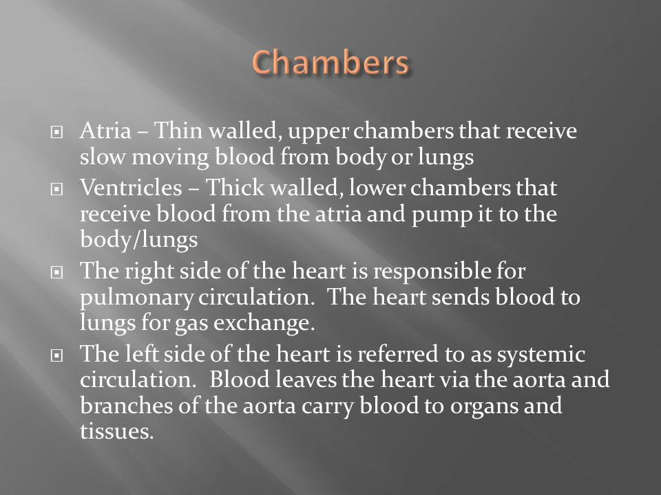 Chambers Atria – Thin walled, upper chambers that receive slow moving blood from body or lungs.
