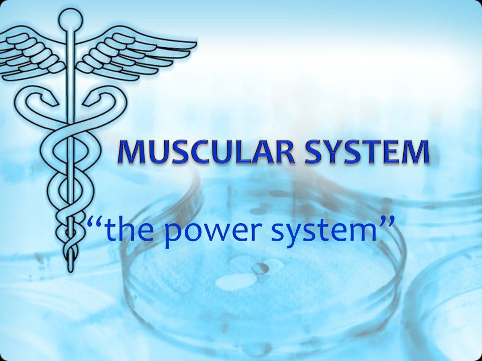 MUSCULAR SYSTEM the power system
