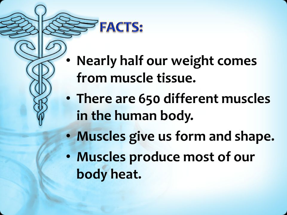 FACTS: Nearly half our weight comes from muscle tissue.