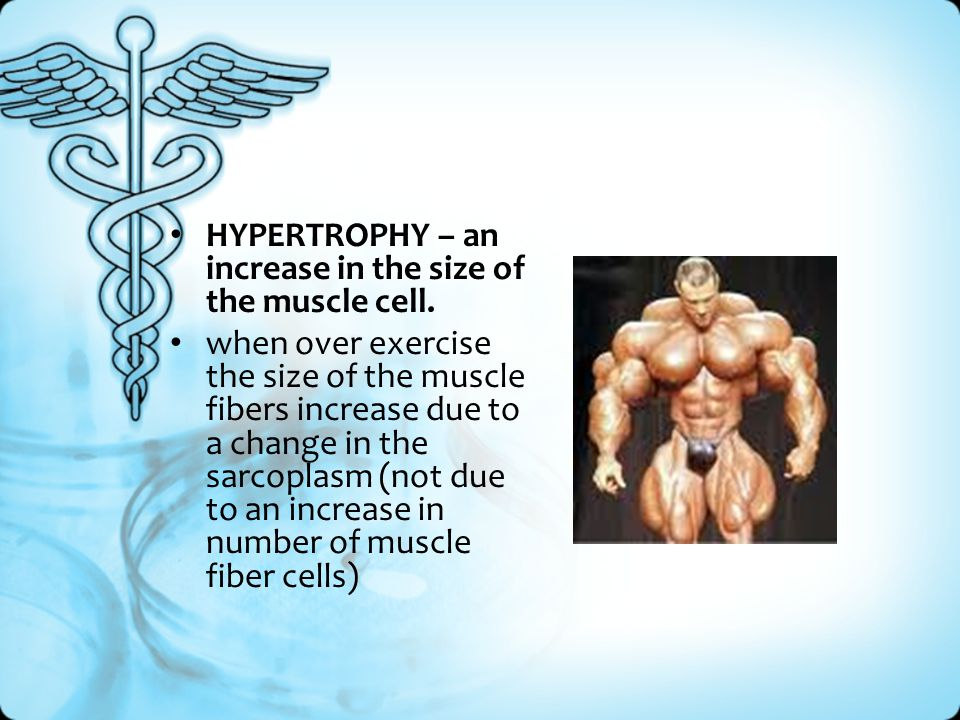 HYPERTROPHY – an increase in the size of the muscle cell.