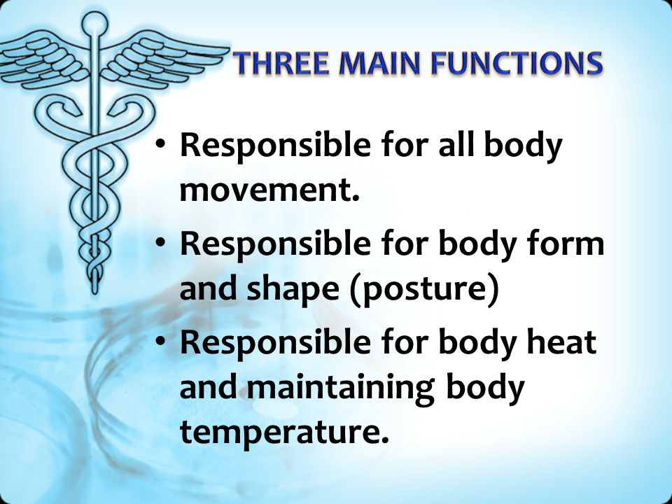 Responsible for all body movement.