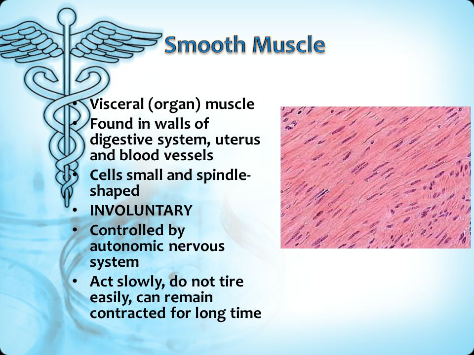 Smooth Muscle Visceral (organ) muscle