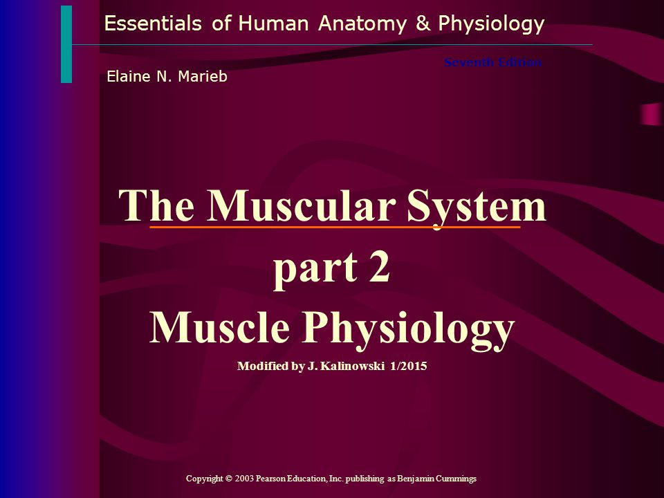 The Muscular System part 2 Modified by J. Kalinowski 1/2015