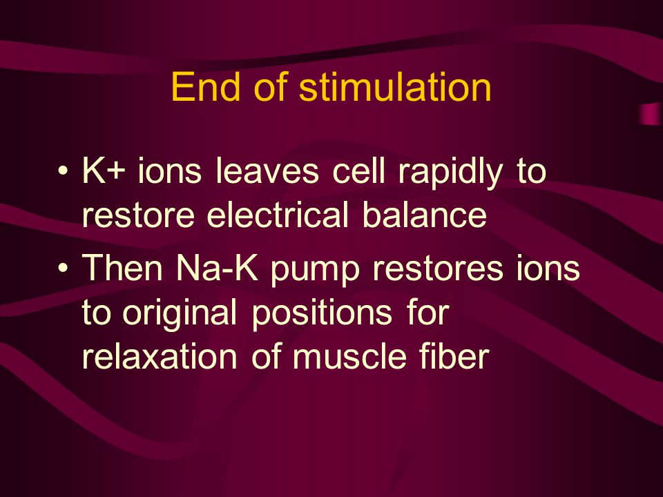 End of stimulation K+ ions leaves cell rapidly to restore electrical balance.