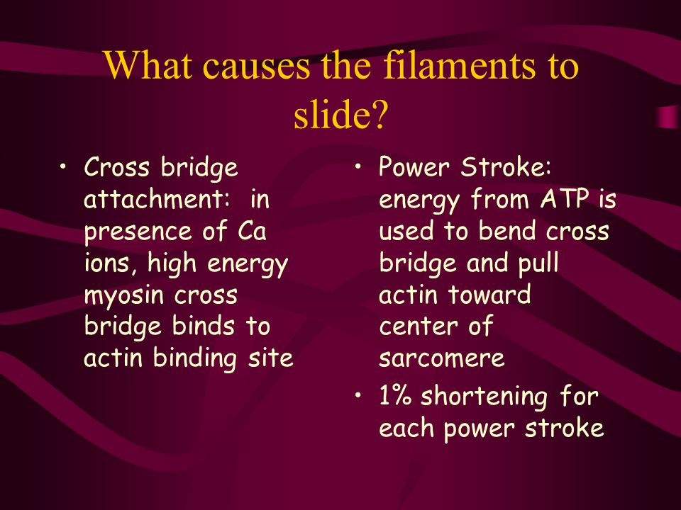 What causes the filaments to slide