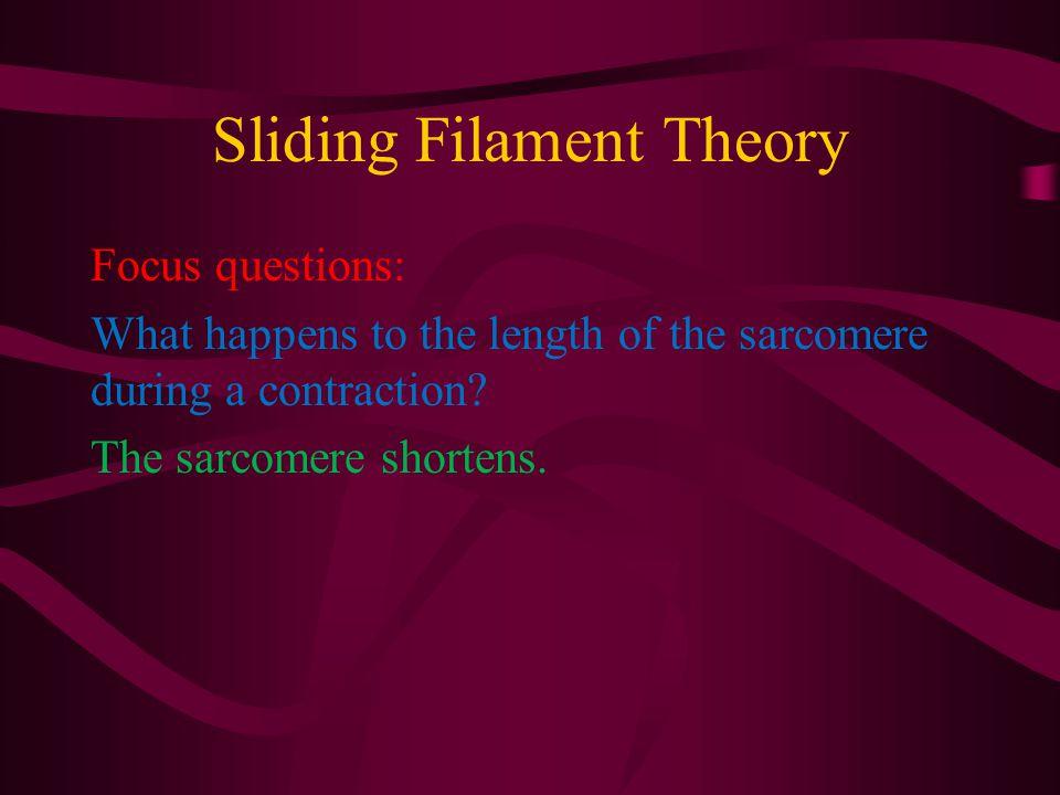 Sliding Filament Theory